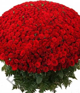 501 роза. Любой цвет.